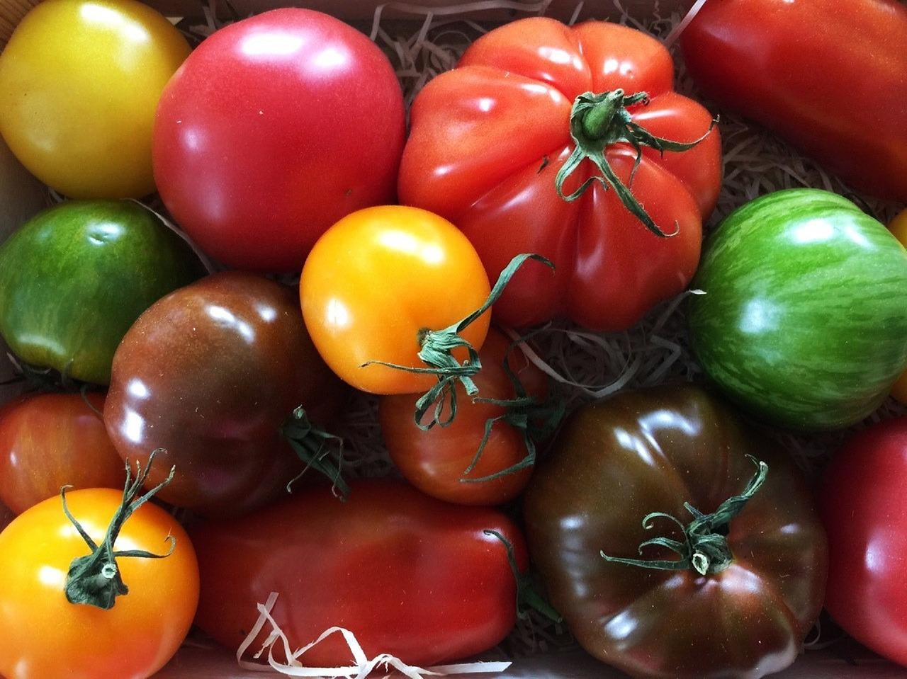 tomatoes-1556061_1280