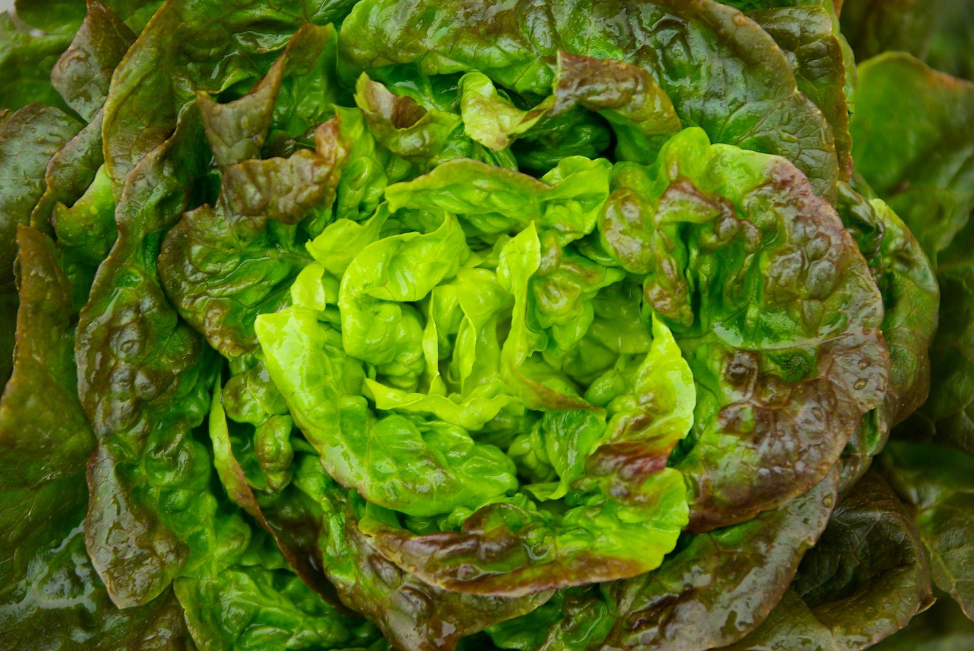 salad-621339_1920